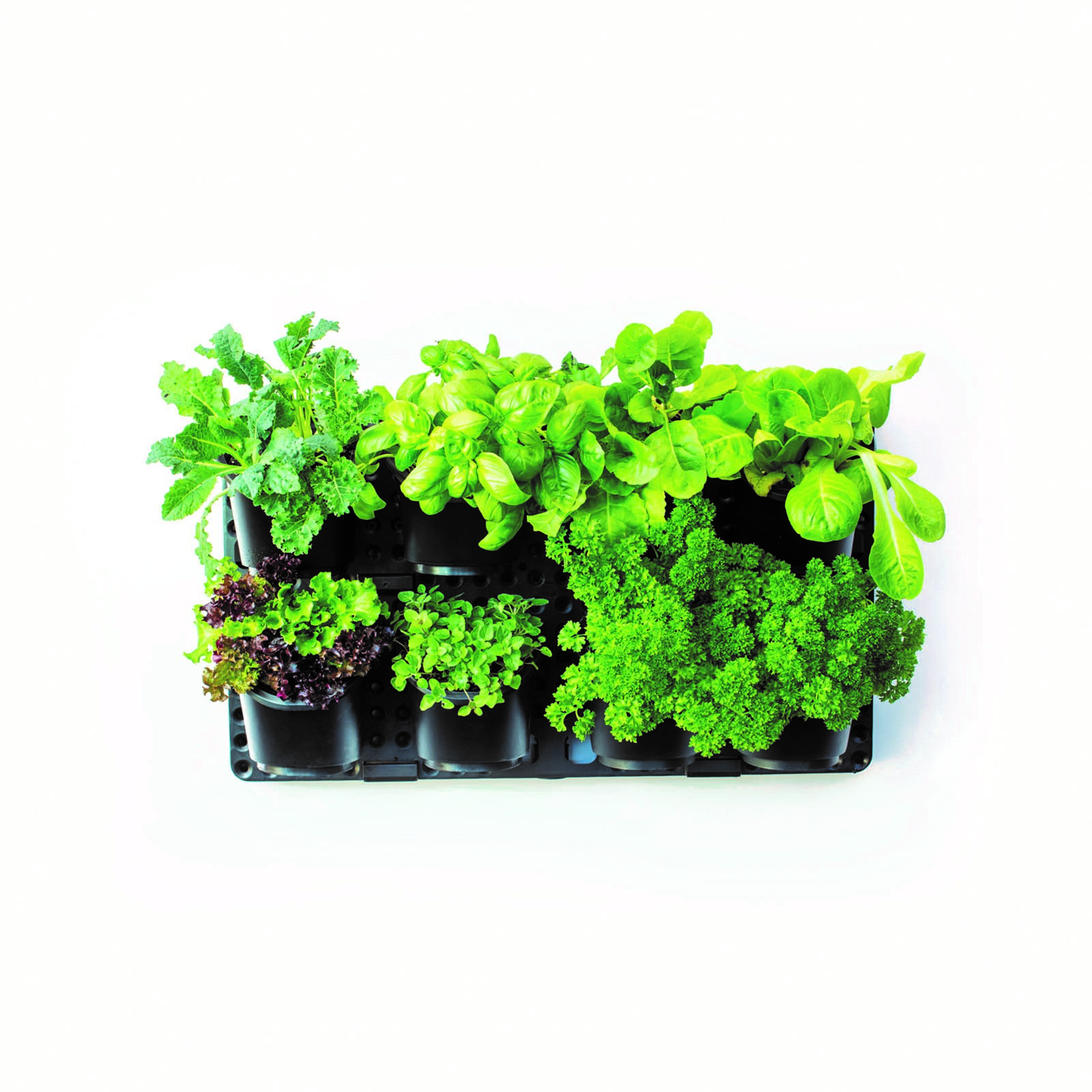 Verticle Wall Planter<br>